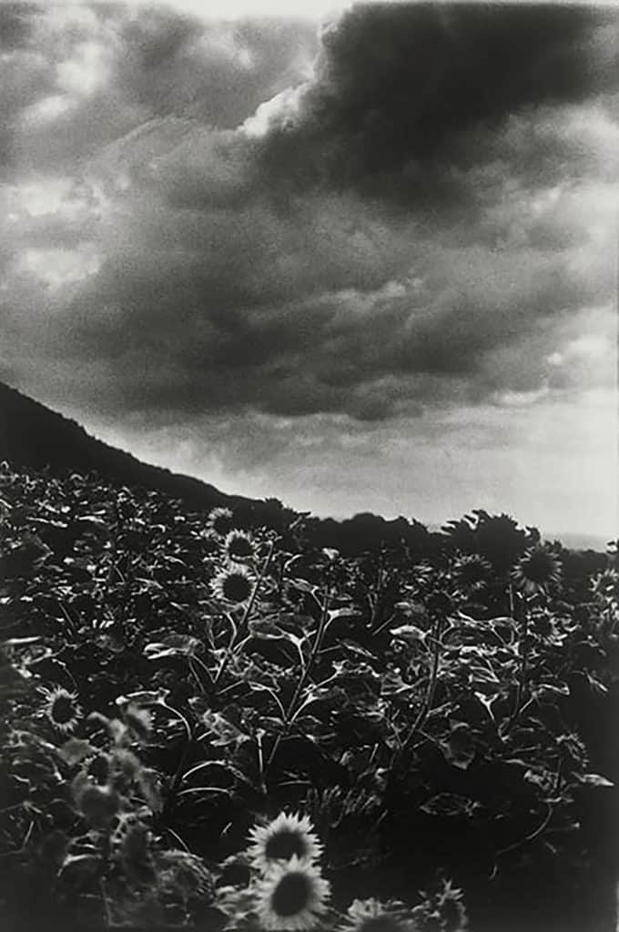 Ming Smith - Goghing with Darkness and Light (Sunflowers) -Singen, Germany, 1989