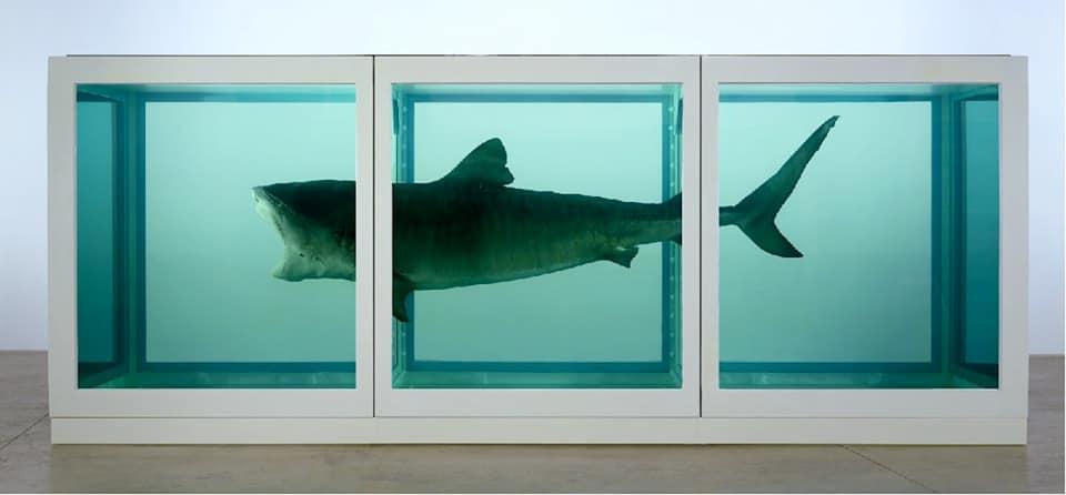 art media. Embalmed shark by Damien Hirst.