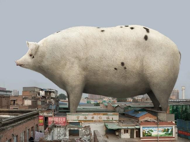 "Liu Di, ""Animal Regulation - No. 19,"" 2016. urban country"