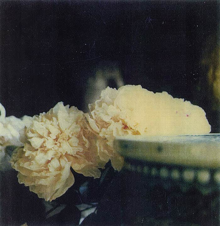 Cy Twombly photographs, Peonies